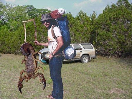 Large scorpion